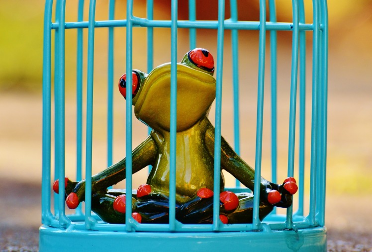 frog-1247177_1920.jpg