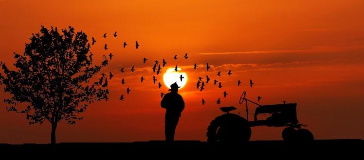 sunset-3812820_1920.jpg